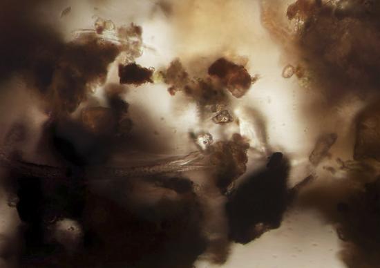 «Oberwasser», 2016Fotografie, Fine Art Inkjet PrintUnikat, 58 x 72 cmBeigegeben 1 Box mit Erbsensamen